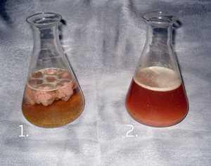Слева содержимое выгребной ямы до обработки бактериями, справа - после