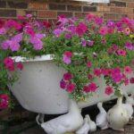 В ванне выросли цветы - отличная получилась клумба