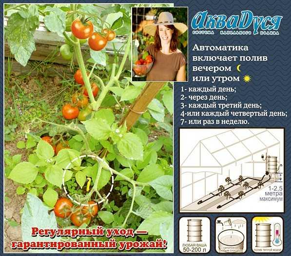 Система для автоматизации полива растений