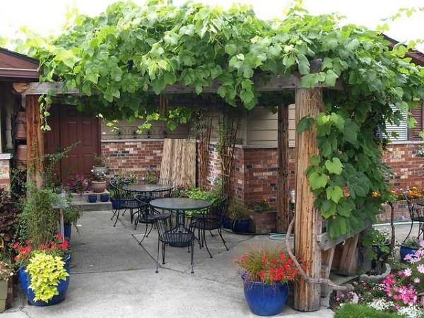 Навес-пергола возле дома из винограда - плотная тень даже в полдень