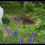 Это уже через месяц такая красота - садовый пру, построенный своими руками меня радует