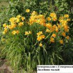 alpijskie-gorki-rastenija-4