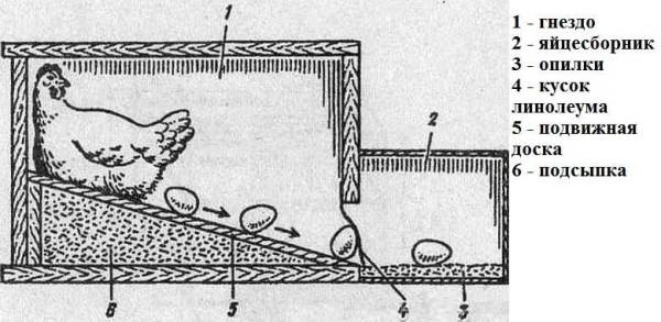 Конструкция гнезда для кур с яццеприемником