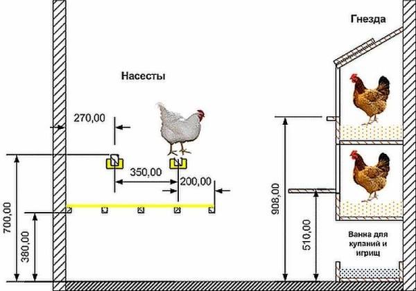 Обустройство курятника внутри: рекомендованные размеры