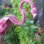 Грациозный розовый фламинго в компании кур)))