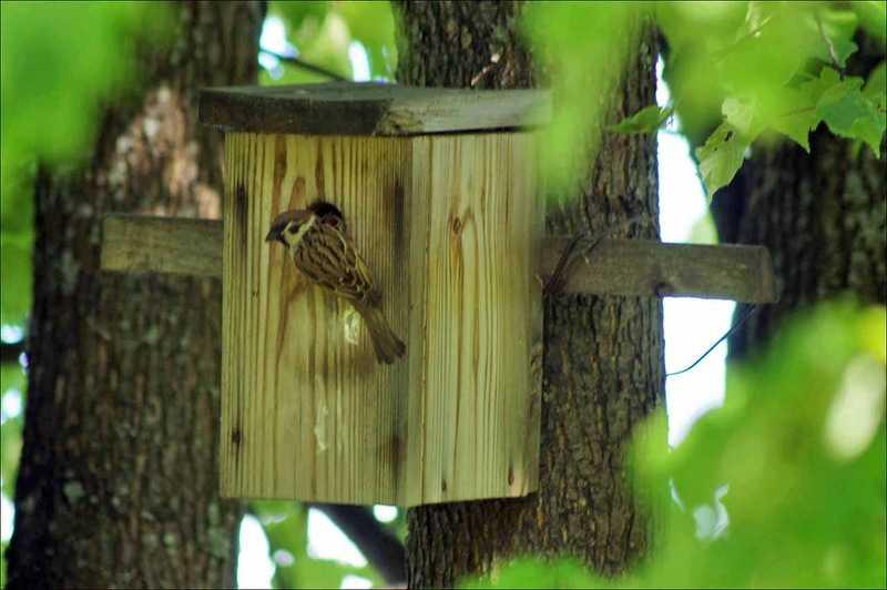 Птиц в лесу своими руками