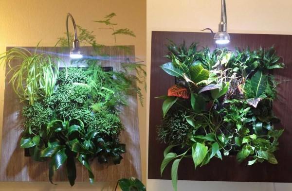 Зеленая картина из растений - необычный способ украшения стен