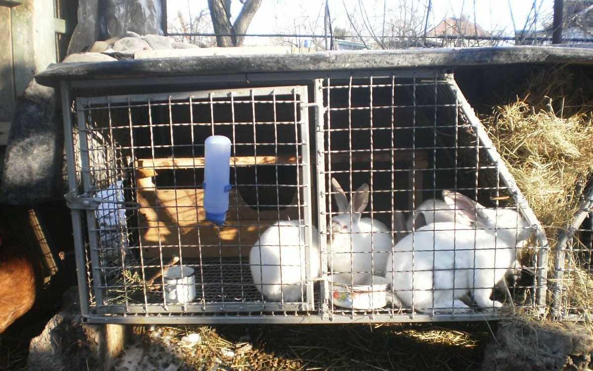 термобелье активно к чему снится кролик в клетке выборе термобелья