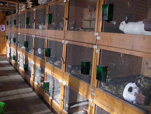 В три яруса клетки в крольчатнике располагают редко - нижние сложно обслуживать