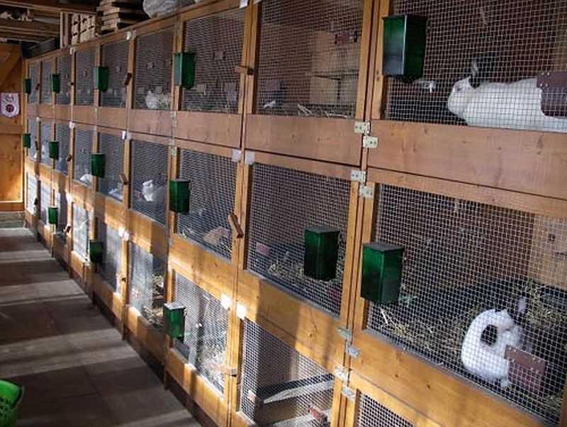 Уличные клетки для кроликов своими руками фото 77