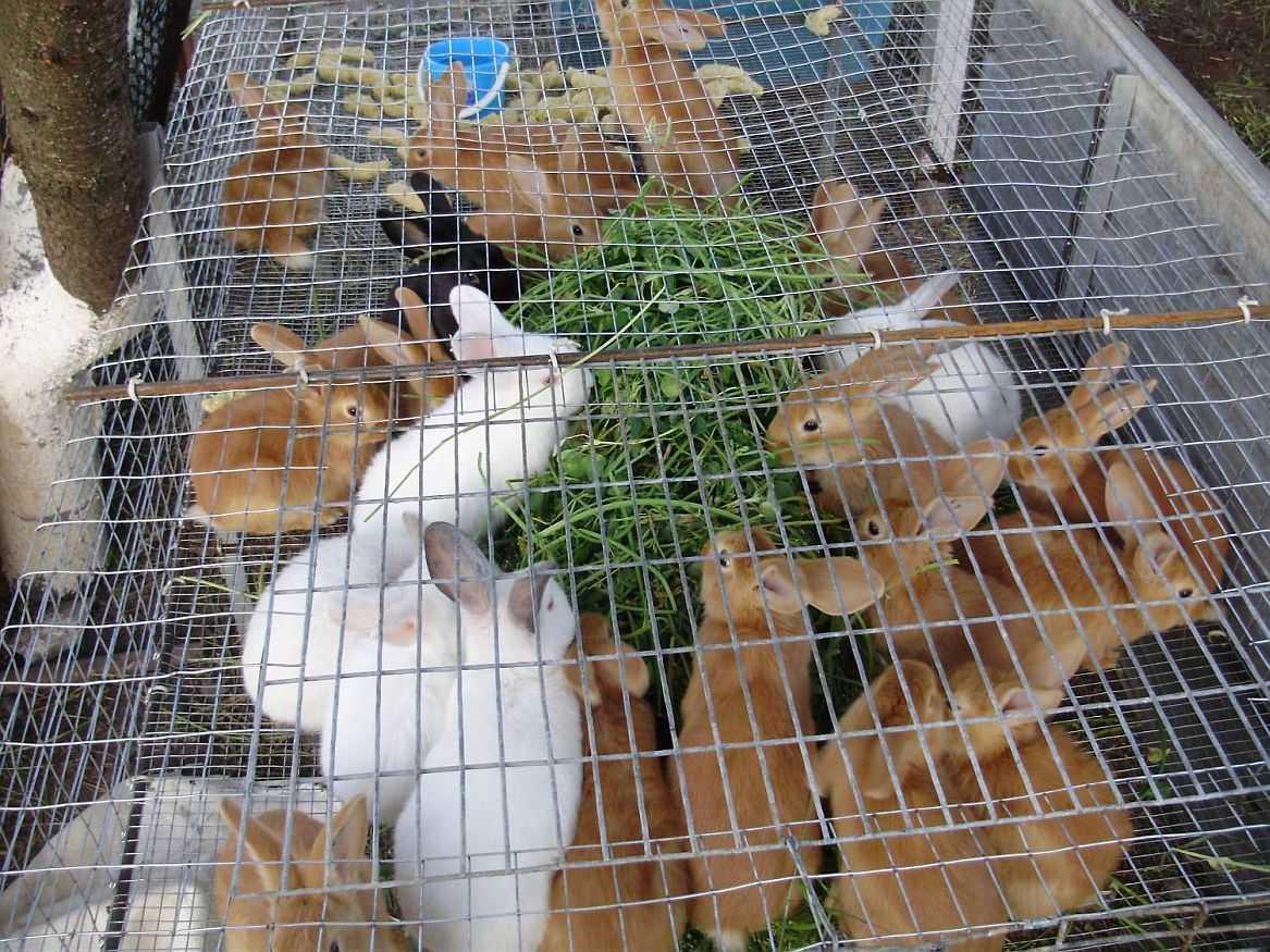 Клетка для кроликов на откорм своими руками 252