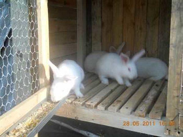 Крольчатник своими руками: клетки, другое оборудование