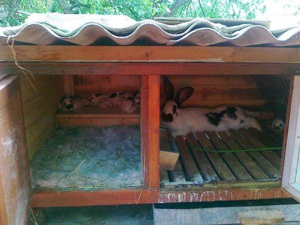Места должно быть достаточно, чтобы кролик мог вытянуться