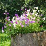 В вазон из пня можно посадить петуньи. В высоких лучше смотрятся ампельные