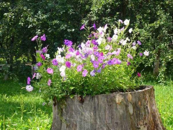 Все своими руками на даче фото цветущее все лето