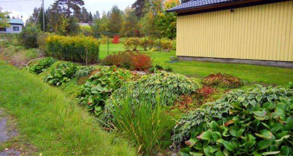 Чтобы края канавы не обсыпались, ее можно засадить влаголюбивыми растениями с мощной корневой системой