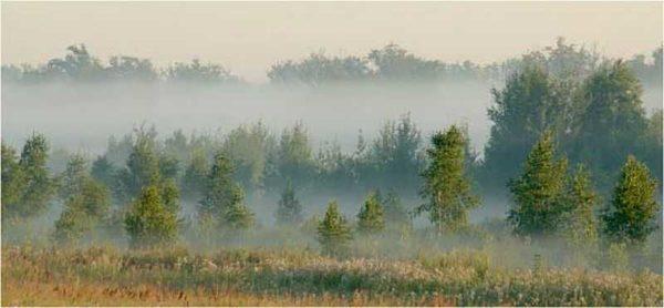 По скоплению тумана можно определить нахождение под землей воды