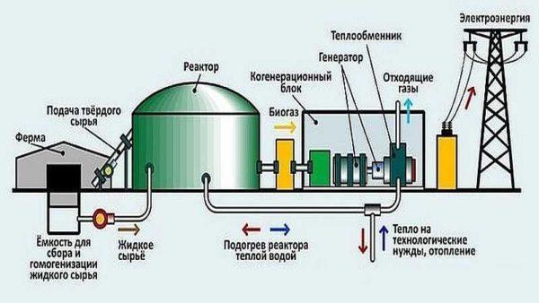 Наиболее целесообразно расположить биогазовую установку так, чтобы отходы с фермы могли поступать смотеком