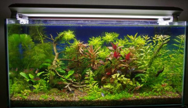 Правильное освещение для аквариума надо подбирать по многим параметрам
