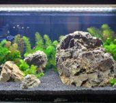 Правильное освещение аквариума должно давать достаточно света, но его переизбыток тоже вреден