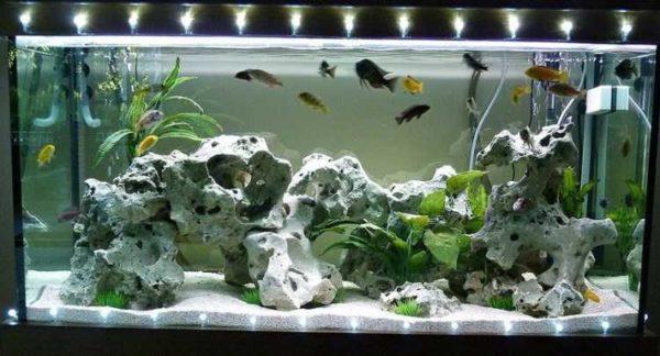 Скалярия в аквариуме: как ухаживать?