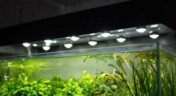 Пример использования светодиодов для подсветки аквариума
