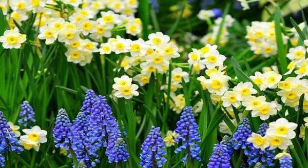 Какие многолетние цветы сажать на даче 697