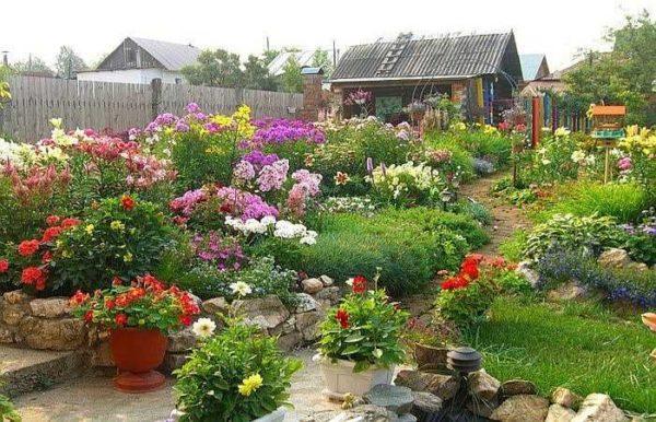 Лето - пора когда на даче полно цветов