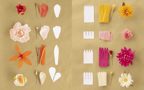 Можно рассмотреть форму лепестков для разных цветов