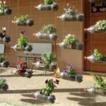 Стенка из цветов - подвесить на каркас и ждать пока будет больше зелени