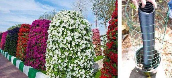 Целый сад из цветущих колонн