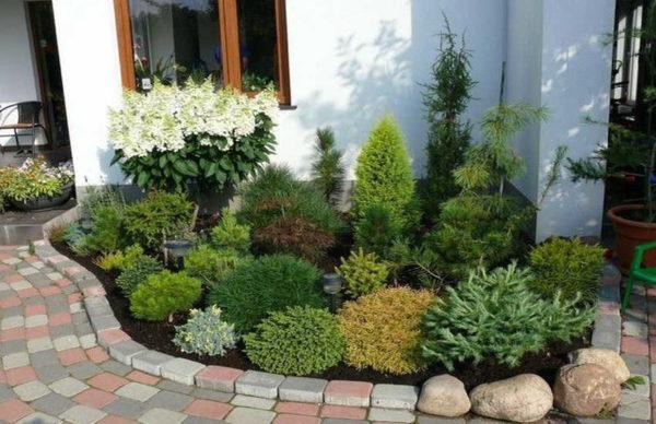 Правила подбора растений: самые высокие у стены или забора, подальше - пониже