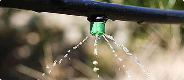 Более экономно расходуется вода при капельной подаче