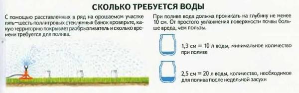 Как проверить, сколько воды получает ваша трава