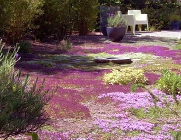 Нетрадиционный газон - нетравяной делают из почвопокровных арстений