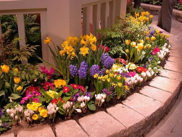 Весенняя клумба - все многоцветие красок в одно время. Она приподнятая -цветы высажены чуть выше, чем почва на остальном участке
