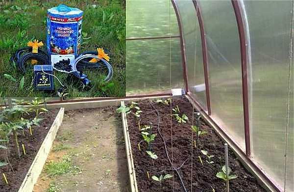 Набор для капелного полива АкваДуся идеален для использования в небольших теплицах, работает и с грядками на открытом гурнте