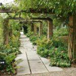 Мощные колонны обвили лианы - заповедный сад