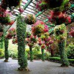 Повесить сверху вазоны с ампельными растениями - и арка стает еще более нарядной