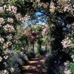 Арка под вьющуюся розу - та же пергола. Но масса розы меньше, чем виноградной лозы и ее под нее еще делают деревянные конструкции