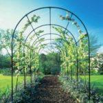 Еще одна арка для роз - садовая пергола, которую мы видим чаще всего