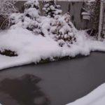 А это зимний пруд. Он в наших местах только в самые морозы покрывается льдом, а до дна не промерзает. Рыбы зимуют там