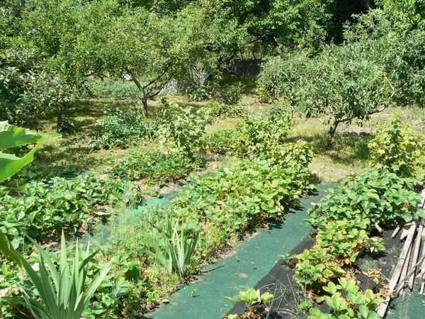 Старое ковровое покрытие может стать садовой дорожкой (хоть и на один год)