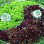 Разные вида салата - красиво, полезно, вкусно