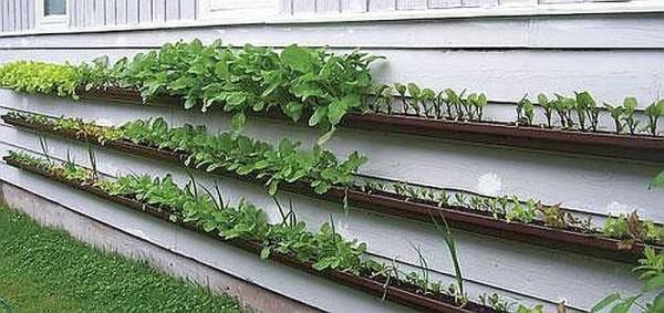 Огород на стене дома