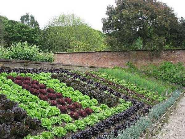 Ровно посаженные листовые овощи разных сортов - это уже красиво