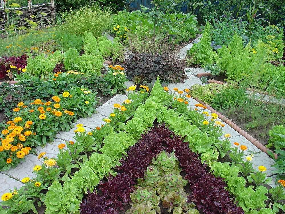 Овощные грядки, окантованные цветами - красиво