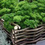 Нарезаете в лесу гибких веток (ивы, например) и пока они свежие, плетете ограду для приподнятой грядки