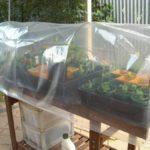 Дуги из толстой проволоки, прикрепленные к ящику, сверху пленка. Парник на балкон готов
