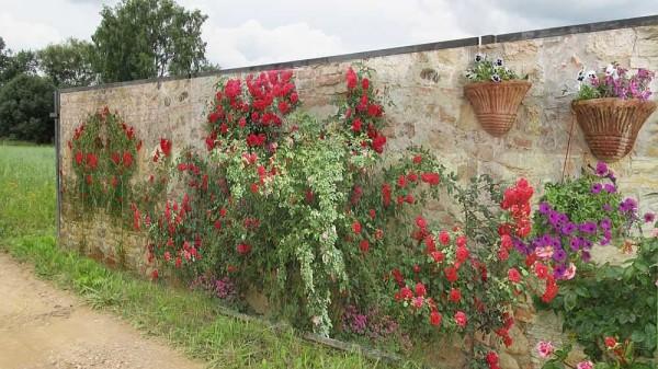 Каменная стена и розы